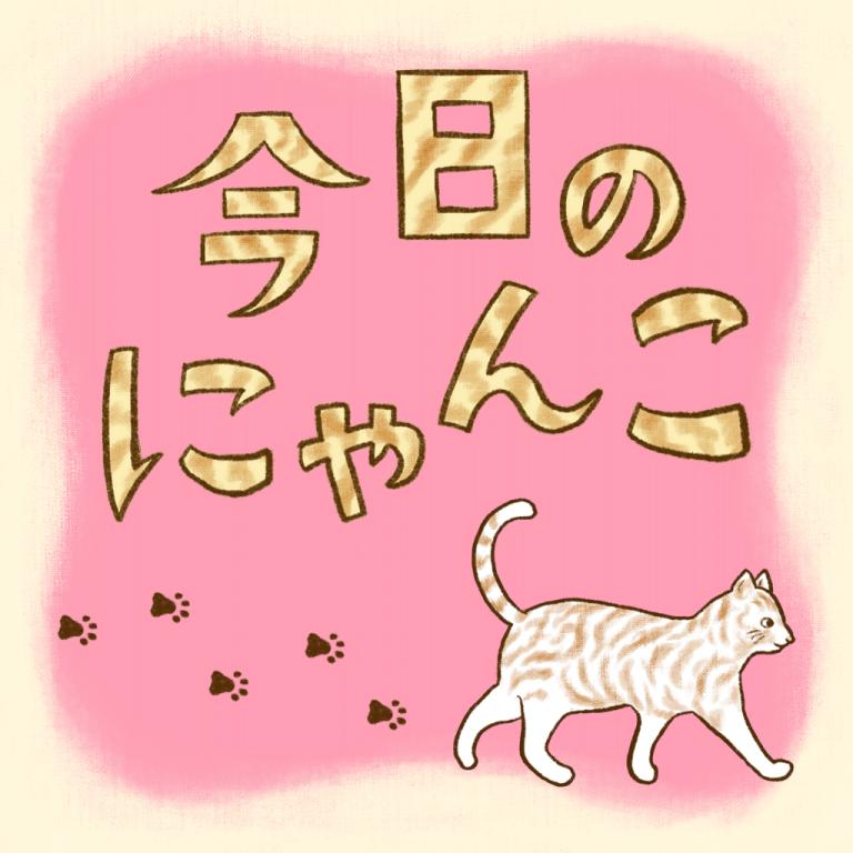 今日のにゃんこ  Daily MOREサムネイル用イラスト